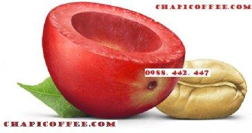 CHAPICOFFEE